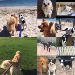Pet home stays (sitting) and walking Cronulla Sutherland Area Preview