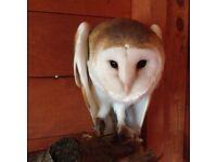 Owls been stolen