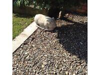 Concrete pig garden feature
