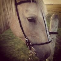 Handmade Horse Tack for Sale