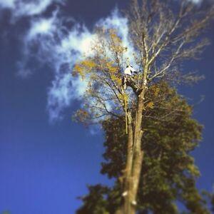 Tree Removal / Pruning Kitchener / Waterloo Kitchener Area image 9