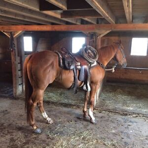 Ranch Gelding For Sale