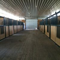 Horse boarding and lessons