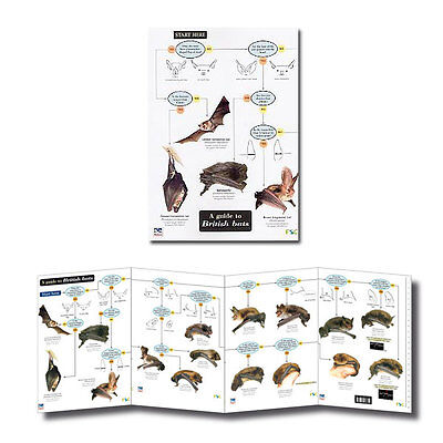 Field Guide to British Bats Laminated Identification Chart Poster