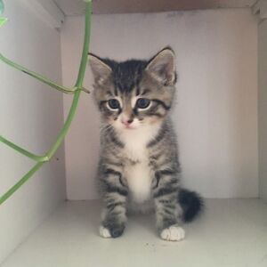 Cute kitten is ready for new home!
