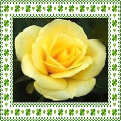 30 Custom Yellow Rose Tile Art Personalized Address Labels