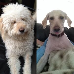 Grooming in your home or mine and pet sitting Gatineau Ottawa / Gatineau Area image 4
