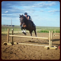 11 Year old, 17.2hh, Gorgeous Bay, Canadia Sport Horse for Sale!