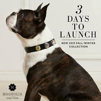 Vote for your Favourite Boston Terrier as seen in ad photo
