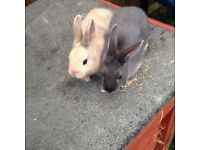 Beautiful rabbits for sale