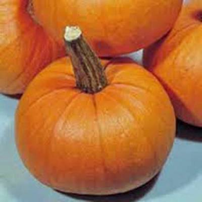 PUMPKIN SEED, SMALL SUGAR, HEIRLOOM, ORGANIC, NON GMO, 100 SEEDS, SMALL (Small Pumpkins)