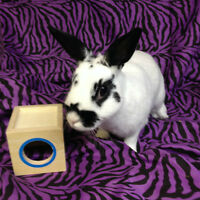BUNNY RESCUE- Hi my name is Meeya and i need a home
