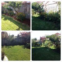 Overgrown Shrub &Small Tree Removal & Prune/Overgrown Grass Cut