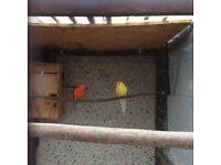 Birds for sale