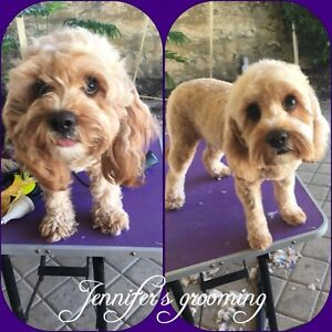 Jennifer's home grooming Clarkson Wanneroo Area Preview