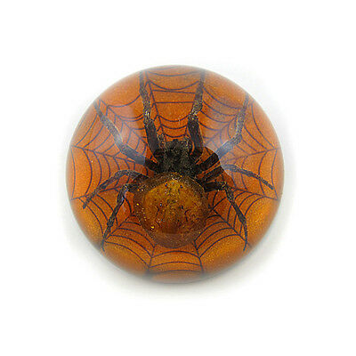 Genuine Real Preserved SPIDER Specimen Paperweight Desktop Paper Weight NIB 2.5""