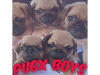 Pugx pup