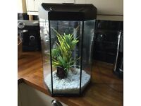 Prism cold water fish tank
