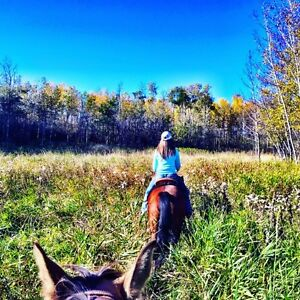 Horse Boarding in Strathcona County