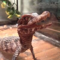 Wanted : Unwanted Reptiles & Supplies!