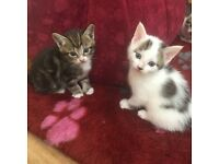 5 gorgeous kittens for sale!