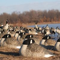 Looking for GHG Canada goose decoys