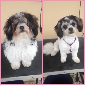 Pet grooming grooming gumtree australia free local classifieds solutioingenieria Choice Image