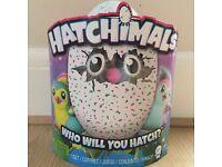 Hatchimals Pengualas Teal Egg - Brand New