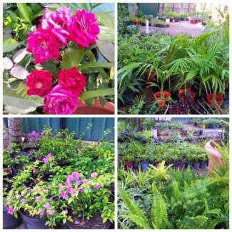 SUNDAY 9AM-5PM CHEAP PLANT SALE FROM $2