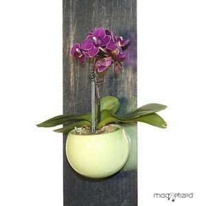 cache pot magn tique 8cm vert pistache cache pot magnets aimant d co plantes ebay. Black Bedroom Furniture Sets. Home Design Ideas