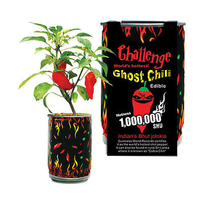 Super Hot Ghost Chilli Pepper In A Can Bhut Jolokia Plant Easy Grow DIY Fun Gift - Easy Summer Diys