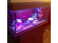 Jewel aquarium 4ft