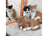 Kittens for sale!! York