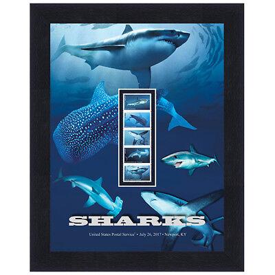 USPS New Sharks Framed Art