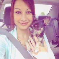 Chihuahua pour accoupler