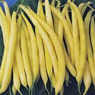 Golden Wax Bean  Bush Bean  Non Gmo Organic 20  Seeds  Great Tasting And Healthy