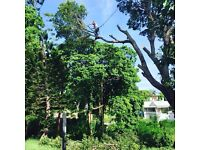 Tree surgeon/climber (notting hill)