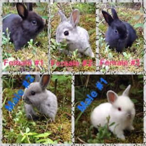 5 Adorable little bunnys looking for their new homes !!!