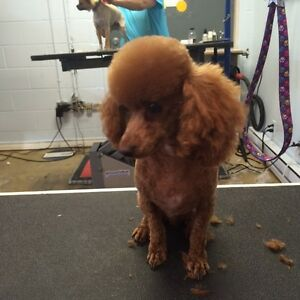 50% OFF DOG GROOMING! When you book our apprentice!