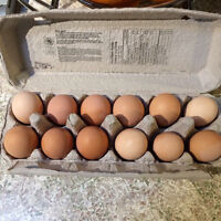 ISO pullets/hens