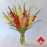 Fleuriste -Floriste