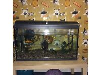 2ft fish tank comes with everything