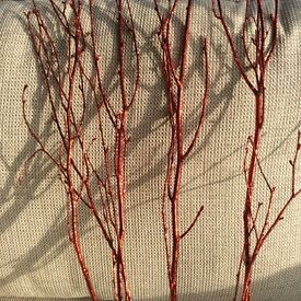 Red branches - coated in red glitter (doesn't come off!)