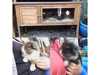 Male lion head with hutch for sale