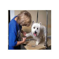 Groomer wanted at busy Doggie Spa