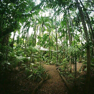 BIG HOME on ACRE OF RAINFOREST. C/ GROVE Coconut Grove Darwin City Preview