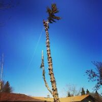 Sterling Tree Services --Tree Removal