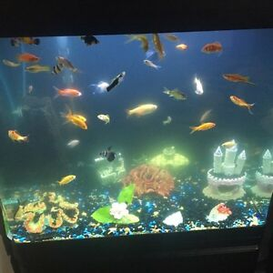 38gal Red sea max fish tank Edmonton Edmonton Area image 4