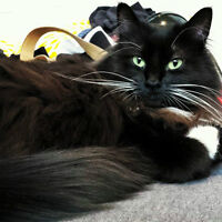 Female adult cat needing to be rehomed