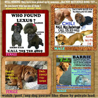 dogs missing still please watch some found not returned home